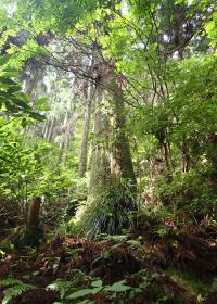 水源を守る豊かな森林