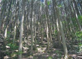 間伐前の森林