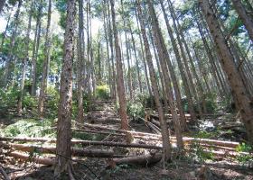 間伐直後の森林