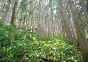 間伐後の森林