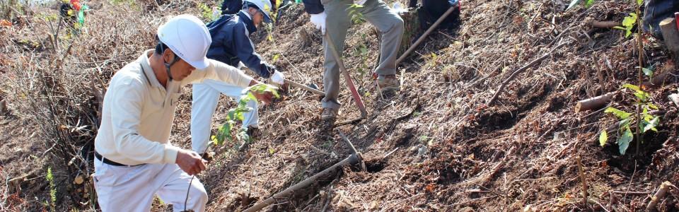 1緑の募金植樹活動